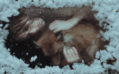 icy portrait fox